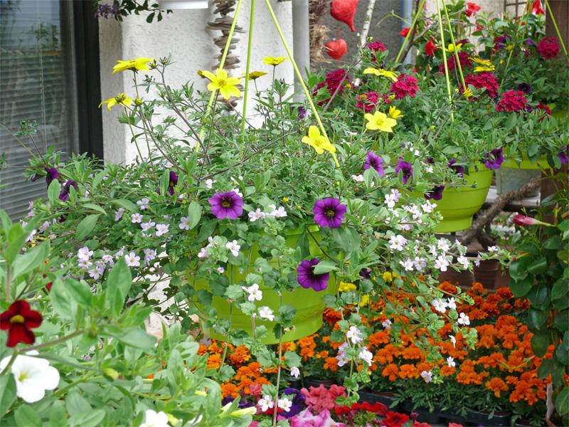 bunte Blumenampeln
