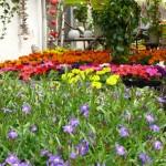Blumen für Garten, Balkon und Terrasse