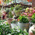 Kübelpflanzen für Terrasse und Balkon